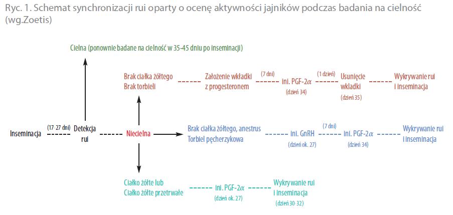 Synchronizacja Rui W Praktyce Portal Hodowcy Hodowla Drobiu
