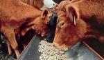 Byczki, jalowki 4 zl/kg. Laki, pastwiska, siano, sloma