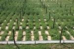 Ukraina. Srodki ochrony roslin, zaprawy pasz.Nasiona,nawozy
