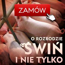 Rozród świń