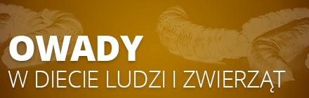 Owady - projekt