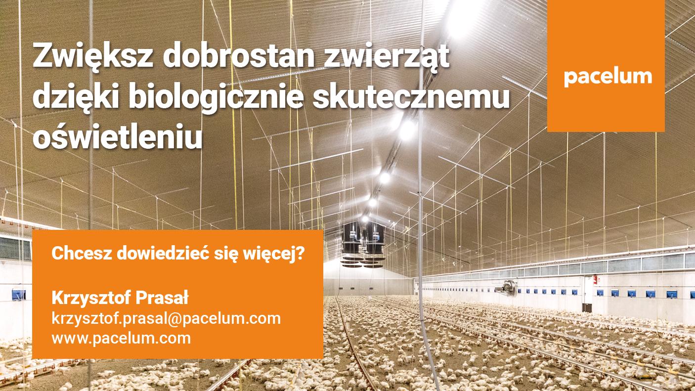 pacelum2